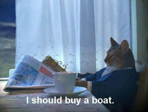 I should buy a boat cat.jpg